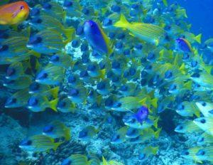 モルディブ 魚